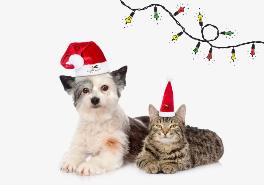 12 Days of Christmas | Humane Society Naples: Non-Profit, No-Kill Animal Shelter Collier County
