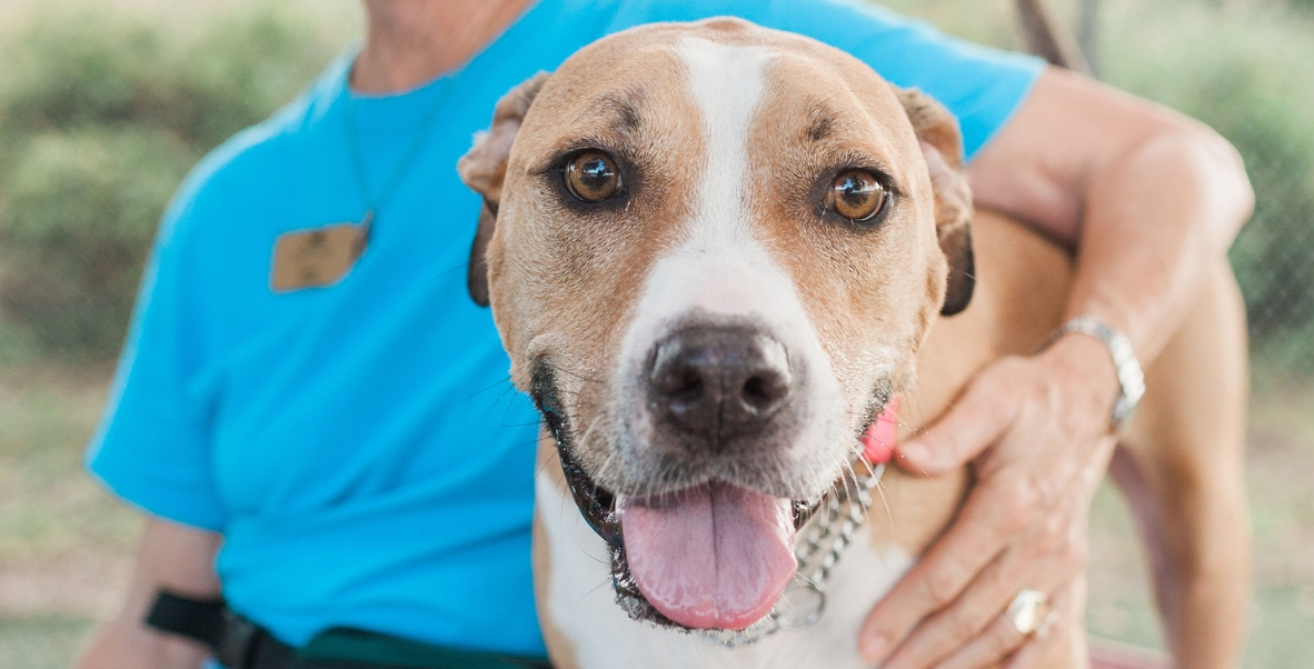 Humane Society Naples | Non-Profit, No-Kill Animal Shelter