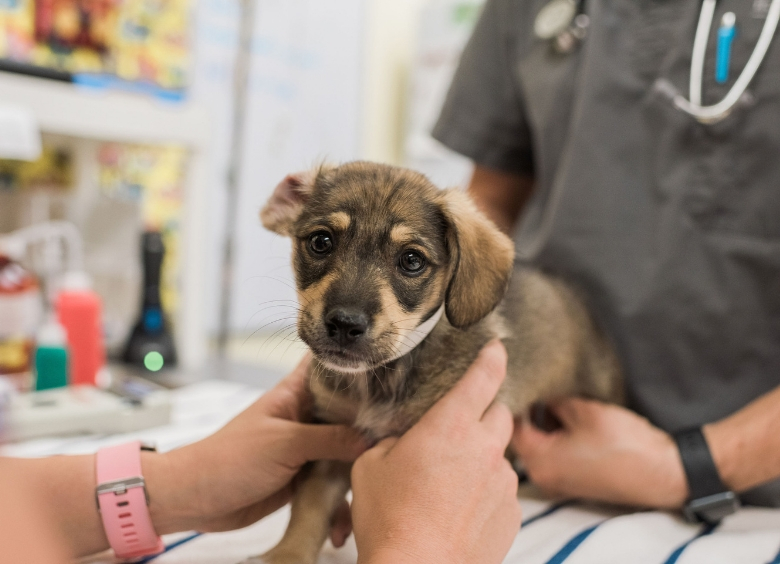 It S Hip To Chip Humane Society Naples