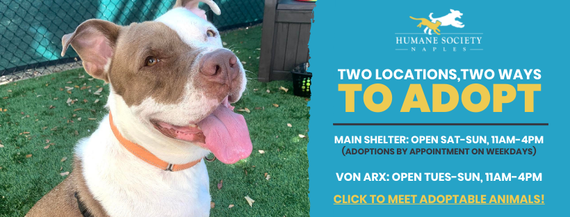 Two Locations, Two Ways to Adopt