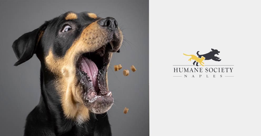 Pet Photo Shoot Fundraiser Humane Society Naples