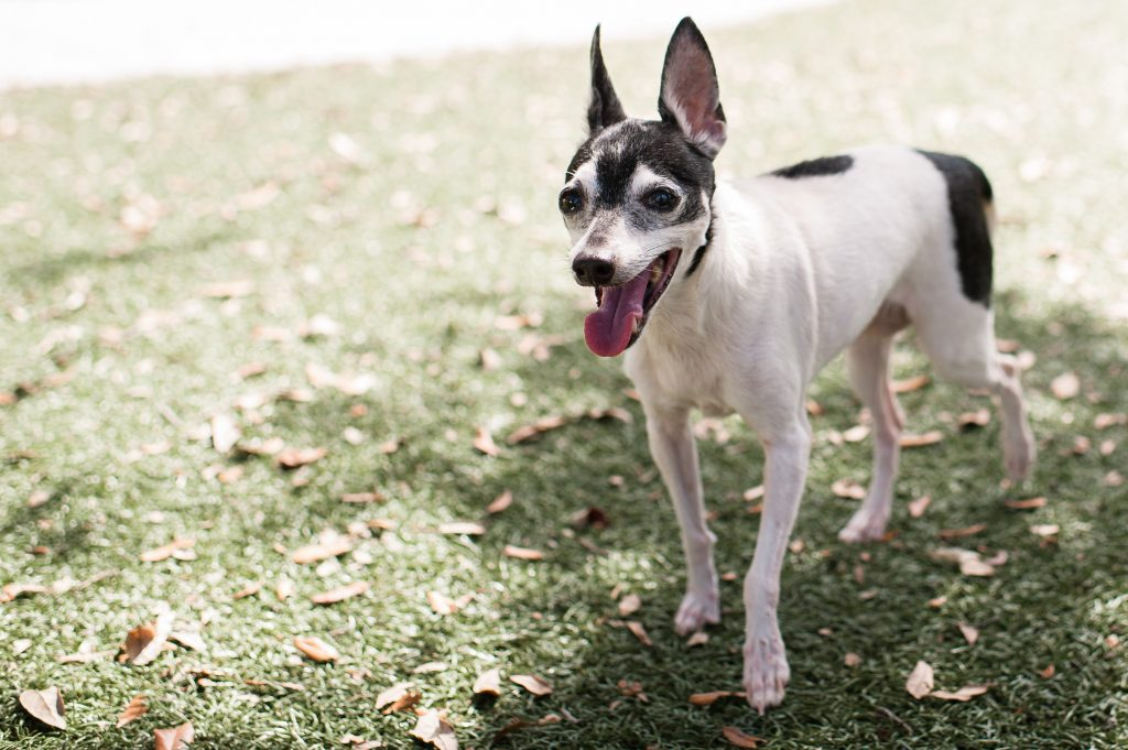 Elanor | Humane Society Naples: Non-Profit, No-Kill Animal Shelter Collier County