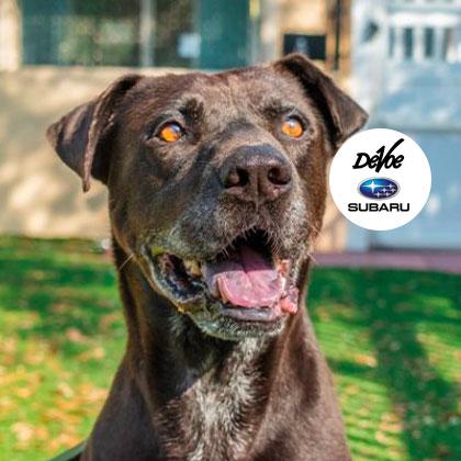 Humane Society Naples | Non-Profit, No-Kill Animal Shelter Collier