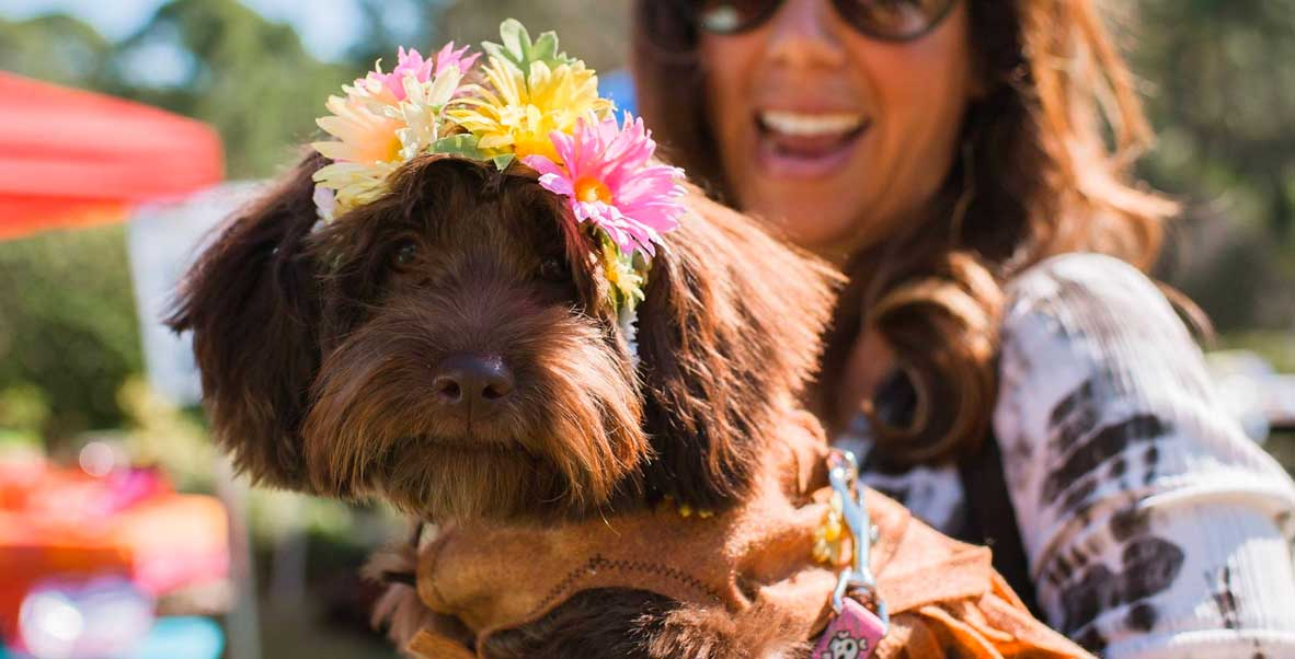 Woofstock | Humane Society Naples Annual Fundraising Event